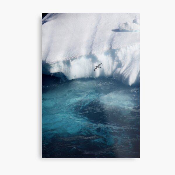 Antarctic bird Metal Print
