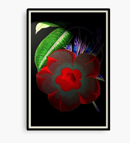 Dark Beauty!!! © Canvas Print