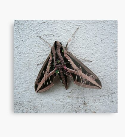 Sphinx Moth After Rain Metal Print