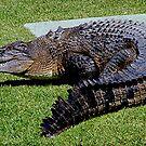 Salt water Crocodile...........! by Roy  Massicks