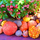 """""""Pumpkin Patch"""" by kcd-designs"""
