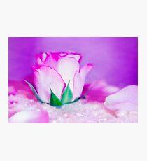 Fleur VII Photographic Print