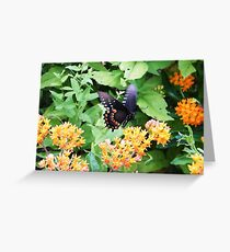 Butterfly at Point Pelee, Ontario Greeting Card