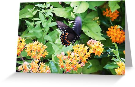Butterfly at Point Pelee, Ontario by Graham Beatty