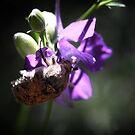 Beetle on Purple by KatsEyePhoto
