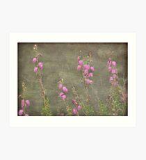 A melody of soft pink Irish Heath Art Print