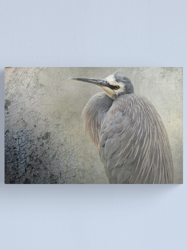 Alternate view of White Faced Heron Canvas Print