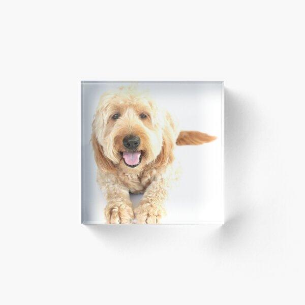 Chase The Dog 2019 Acrylic Block