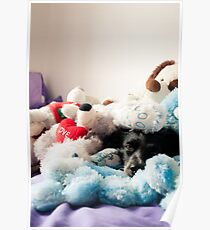 Dog toy Poster