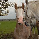 Horses, by JoeTravers