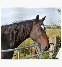 Horse over Gate, Poster