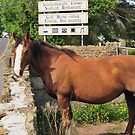 Horse Gazing, by JoeTravers