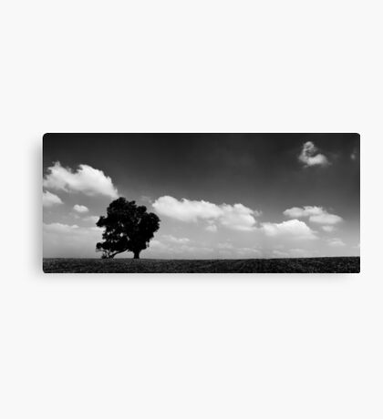 standing alone tree Canvas Print
