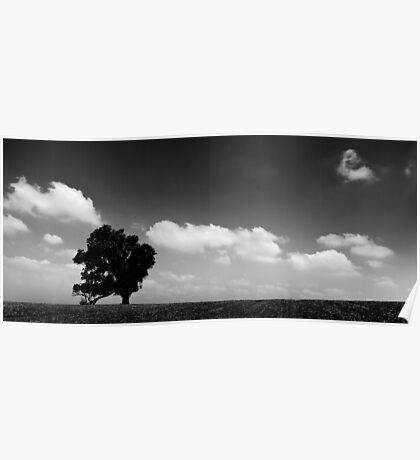 standing alone tree Poster