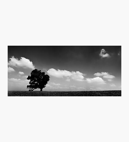 standing alone tree Photographic Print