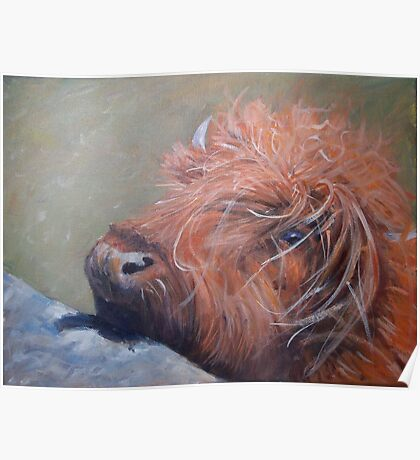 ickle hairy cow Poster