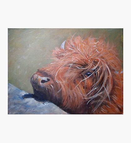 ickle hairy cow Photographic Print