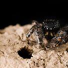 Spider 1:1 spider by Douglas Gaston IV
