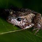Macro Frog by Douglas Gaston IV