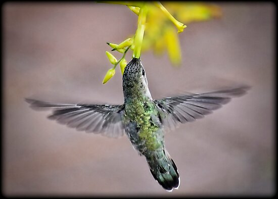 Wings of Love by Saija  Lehtonen