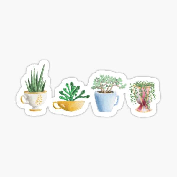 teacup succulents Sticker