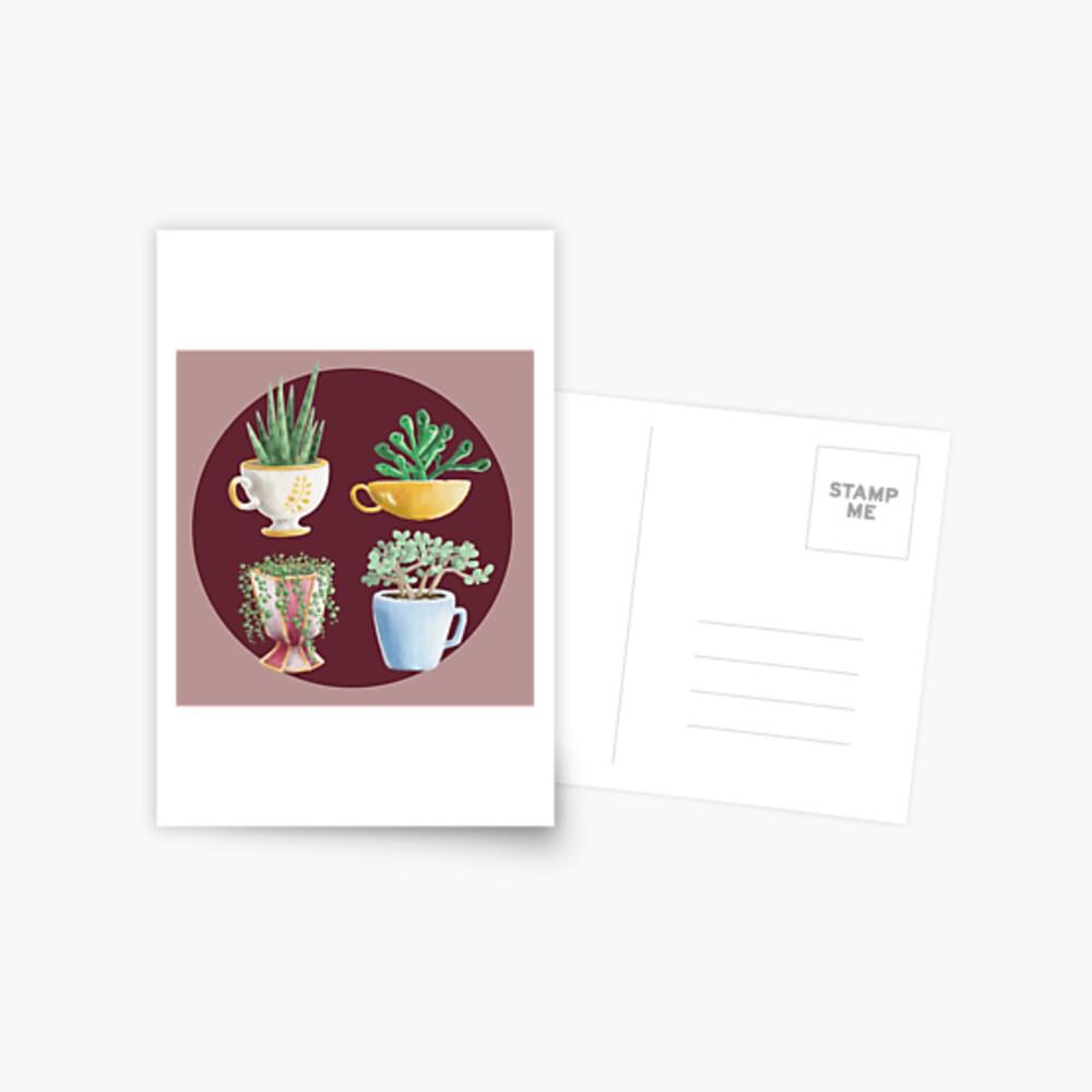 teacup succulents Postcard