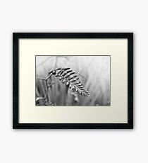 Montbretia Monochrome Framed Print