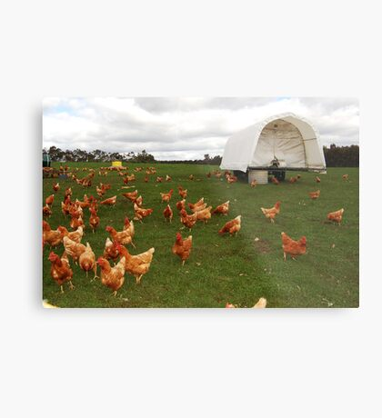 Happy Chickens (the life that all chickens deserve to live) Metal Print
