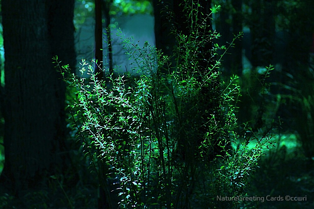 Moon Struck Woods by NatureGreeting Cards ©ccwri