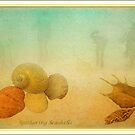 Gathering Shells by margo