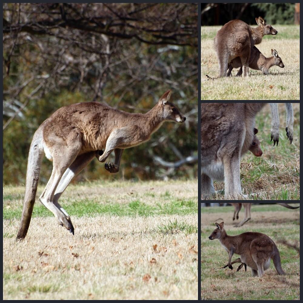 Kangaroos by shortshooter-Al