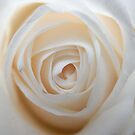 Close to the White Rose 2 by lissygrace