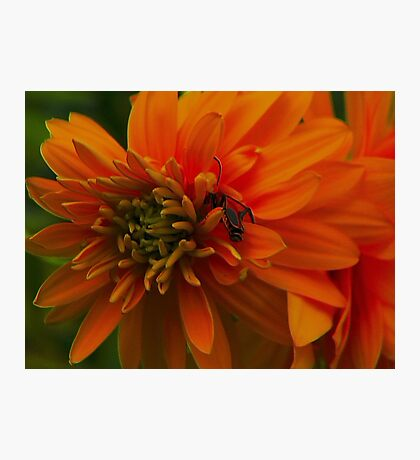 Togetherness ! Photographic Print