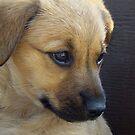 Cutie Profiled! by PatChristensen