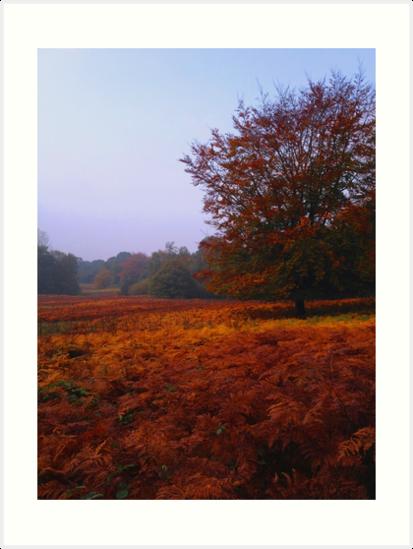 Autumn Field by JenThompson85