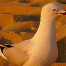 Seagull ~ And Where Is My Food, HUH??? by Toni Kane