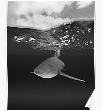 Shark Under The Clouds Poster