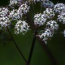 Wild flower of forest 3 by Antanas
