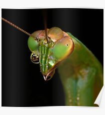 Mantis Monocles ! Poster