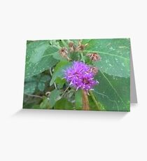 Mistflower, Blue Boneset, Wild Ageratum Greeting Card