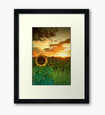 The Sunworshiper Framed Print