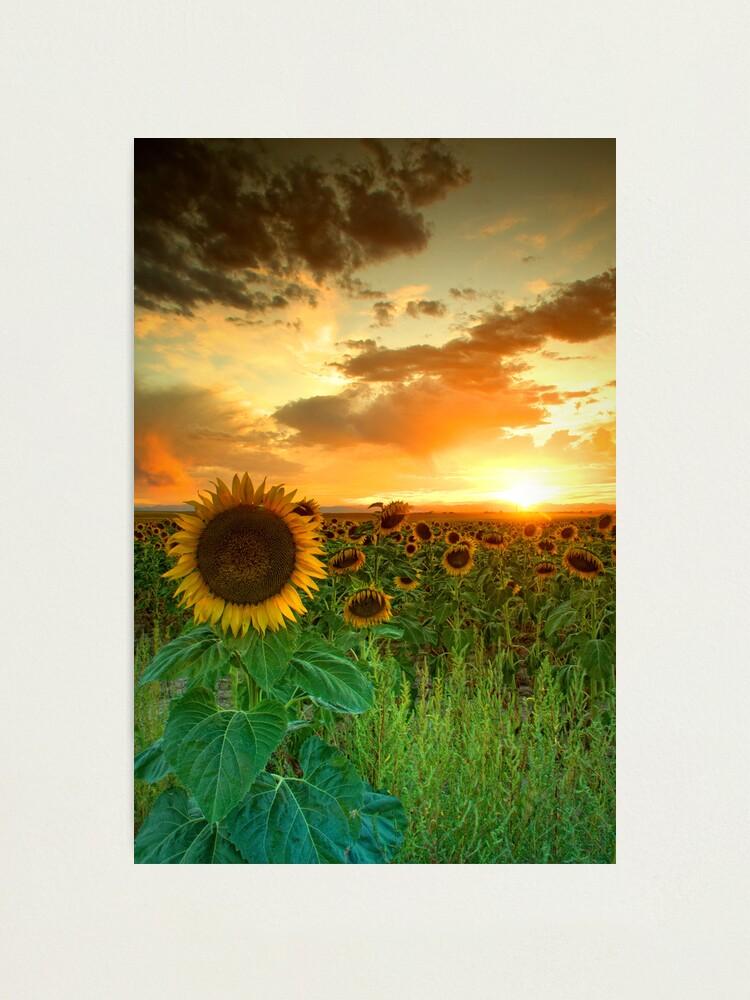 Alternate view of The Sunworshiper Photographic Print