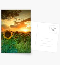 The Sunworshiper Postcards