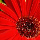 Red!  by DearMsWildOne