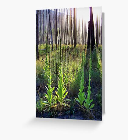 Resilience (Common Mullein) Greeting Card