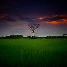 Rice field by laurentlesax