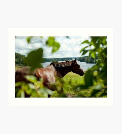 Häst, Fällfors Art Print