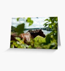 Häst, Fällfors Greeting Card