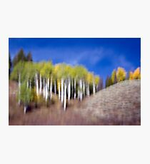Shapes & Colors of Fall Photographic Print