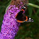Schmetterling & Schmetterling Baum. by Lee d'Entremont